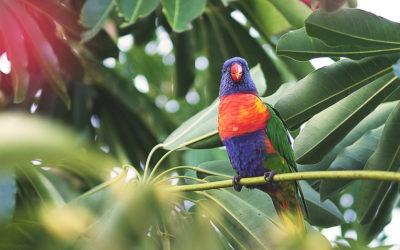 Wycieczka do papugarni