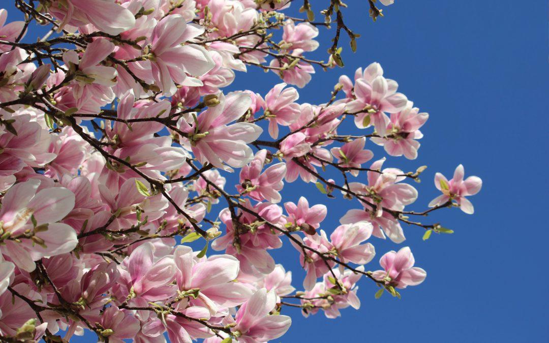 Pobawmy się razem – wiosenne drzewa