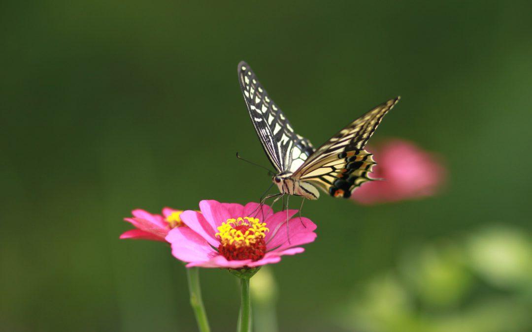 Pobawmy się razem – kreskowany kwiat
